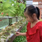 Green fingers, green minds in the Year of Fruit and Veg